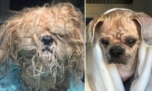 perro-enredado antes y despues